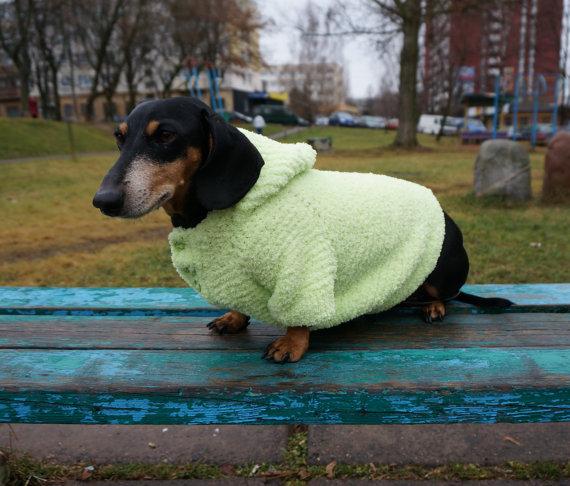 Cute Dachshund hoodie