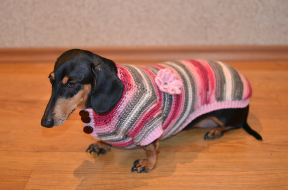 Dachshund jumper for girl dog