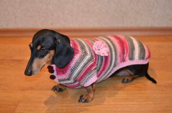 Dachshund jumper for girl dog