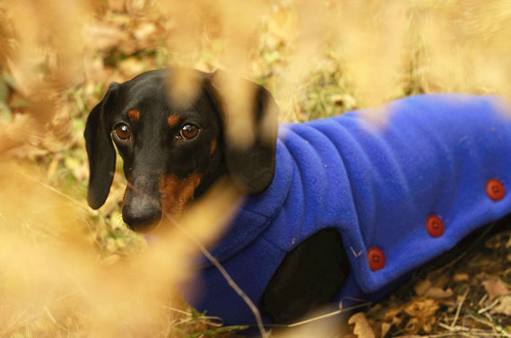 Dachshund winter coats