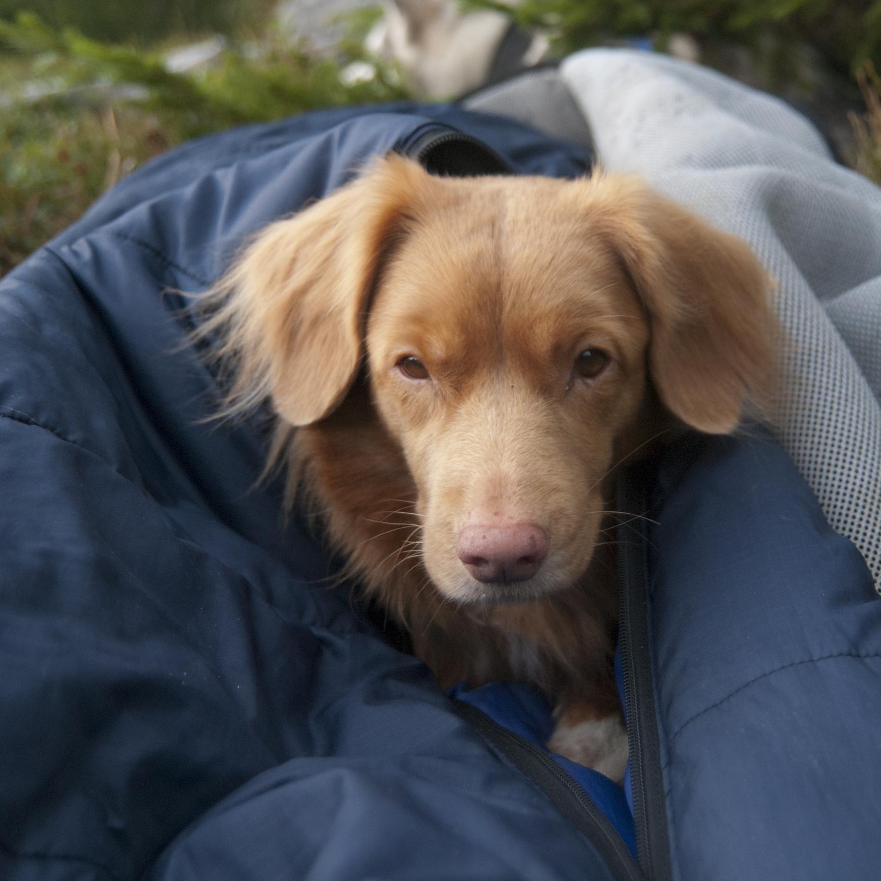 The Dog Sleeping Bag Guide