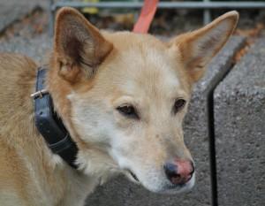 dog service training
