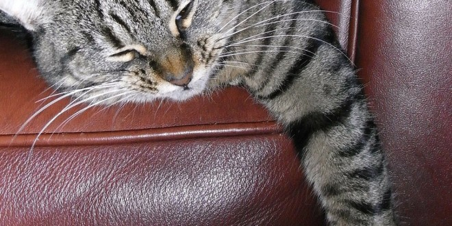 7 Simple Tricks On How To Keep Cats Off Furniture