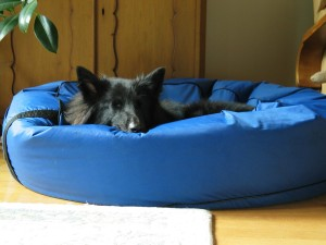 sleeping bag for dogs