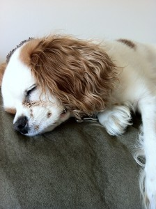 Dog sleeping bags