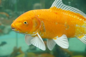 10 easy pets to take care of for people with no time for Easy to take care of fish