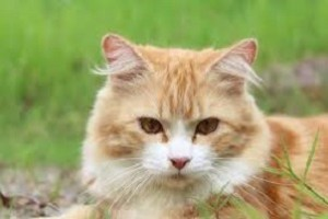 Poisonous plants for cats