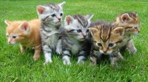 Poisonous plants for kitten