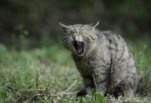 Poisonous plants for cats