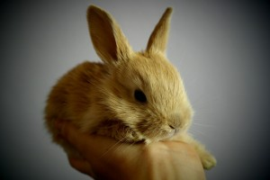 Rabbits are easy to care for