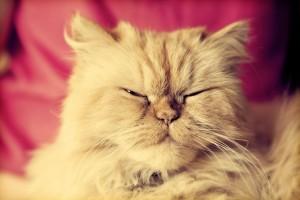 how to stop feline spraying