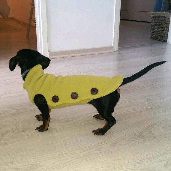 coats for winter dachshund
