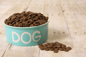 How to select a dog bowl