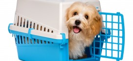 Crate training tips for dog