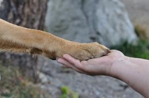 dog shaking hand