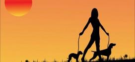 Pet walking rates