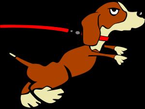 Leash training dog