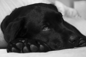 Constipation remedy for dogs