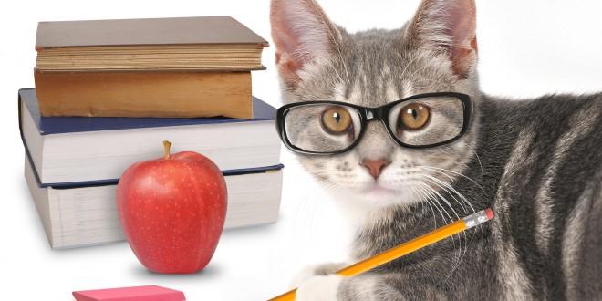 whoopi goldberg cheshire cat