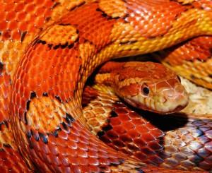 New pet snake owner
