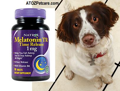 Is melatonin safe for dogs