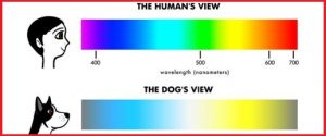 attractive colors to dogs