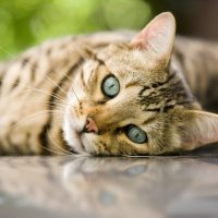What to do when your lost cat returns home