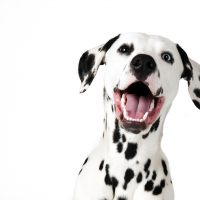 dog vaccine for covid 19