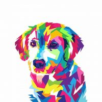 What color is a dog most attracted to